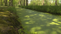 CLOSE UP: Thick layer of green algae and small dried leaves in water canal Stock Footage