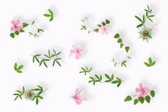 flat lay of green passionflower plants and pink hibiscus flowers close up on  - stock photo
