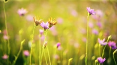 Rural landscape with wild flowers in meadow. Beautiful spring background Stock Footage