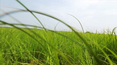 First-person view, an animal running on meadow grass Stock Footage