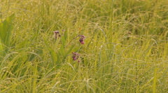 Morning dew on the grass meadow flower Stock Footage