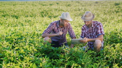 Two young farmer studying pea sprouts on the field, use the tablet Stock Footage