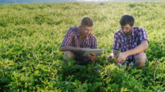 Two agronomist working on a green field, studying the plants, use tablet Stock Footage