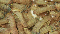 Mantis shrimp in a water tank at a seafood market in Hong Kong. Stock Footage