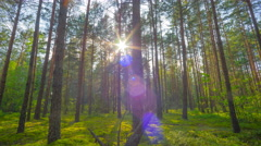 8K sunset in the summer magic forest, time-lapse filmed by crane Stock Footage