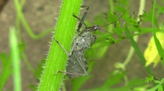 Assassin bug on plant stem Stock Footage