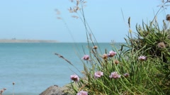 Wildflowers on cliff edge on coast of Ireland Stock Footage