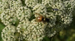 Bee crawling on the plant Stock Footage