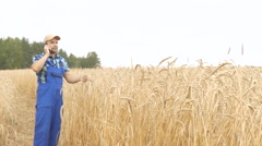 Farmer in plaid shirt in a field examining wheat crop ans talking on phone at Stock Footage