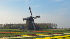 AERIAL: Stunning traditional windmill and field of tulips at keukenhof gardens Stock Footage