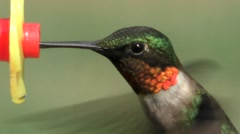 Ruby-throated Hummingbird (archilochus colubris) Stock Footage