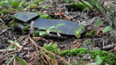 Old boot in moss - Deep forest Stock Footage