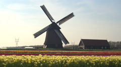 AERIAL: Beautiful colorful blooming tulips in front of old wooden windmill Stock Footage