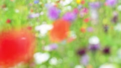Soft focus wild poppies and daisies, gently blowing in wind in the sun. Stock Footage