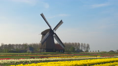 AERIAL: Picturesque colorful blooming tulips and old vintage wooden windmill - stock footage