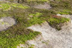 Colorful heath vegetation Stock Photos