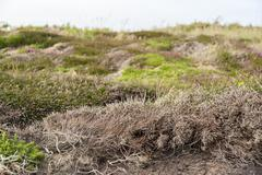 colorful heath vegetation - stock photo