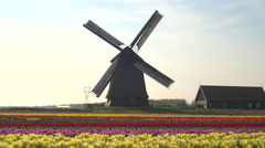 AERIAL: Lovely colorful blooming tulips in rows and old working wooden windmill - stock footage