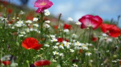 Close-up of beautiful soft focus wildflowers in summer Stock Footage