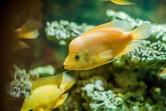 Aquarium fish close up picture Stock Photos