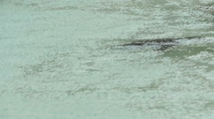 Penguin swimming under rain Stock Footage