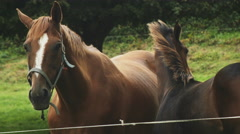 Static shot of a brown horse relaxing with its foal in a green meadow. Stock Footage