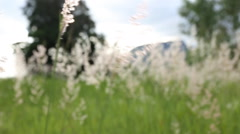 Grass swaying in the wind Stock Footage
