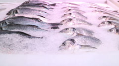 Fresh fish chilled in ice. Smooth movement. Stock Footage