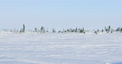 Wide panning shot of a snow covered plain with trees in the background. Tire Stock Footage
