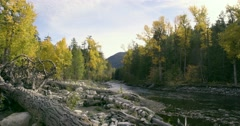Wide shot of a river running through the forest. Dried tree trunks and rocks in Stock Footage