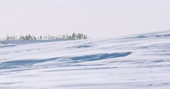 Wide shot of snow blowing across a plain with trees in the background. Stock Footage