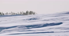 Medium shot of snow blowing across a plain with trees in the background. Stock Footage