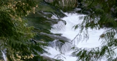 A rushing river as seen from between the trees in Bella Coola. Stock Footage