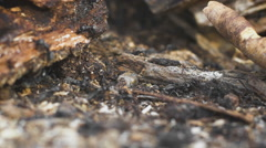 Ants on a tree, wild life Stock Footage