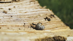 An ant eating a worm Stock Footage