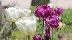 Garden Flowers In The Marais Quarter, Paris Stock Footage
