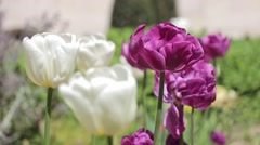 Colorful Flowers In Paris Garden During Spring, France Stock Footage