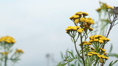 Yellow wild flowers on the shore of the lake Stock Footage