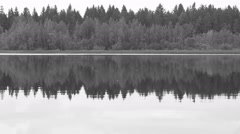 Black and white Forest reflection in the lake Stock Footage