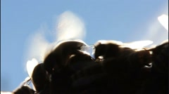Bees on honeycomb extracted from the hive Stock Footage