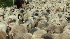 Herd of Sheep on a Mountain Pass Stock Footage