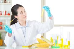 corn biology research from asian female scientist - stock photo