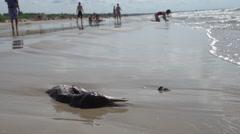 Dead Bird On Sandy Beach, People, Waves HD Stock Footage