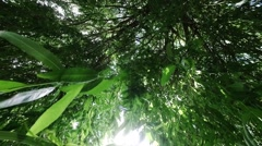 Looking upward through tree leaves in breeze of a weeping willow tree Stock Footage