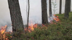 Forest ground fire line Stock Footage