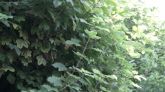 Summer evening insects buzzing Stock Footage