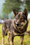 Dog on green grass Stock Photos