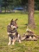 Dog on green grass - stock photo
