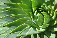 Spiral patterns of an aloe Stock Photos