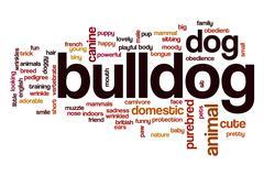 Bulldog word cloud concept Piirros